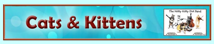 Cats and Kittens Computer & Photoshopped Art